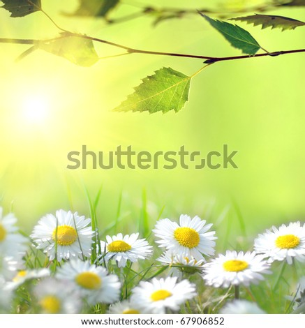 Daisy and the sun behind - stock photo