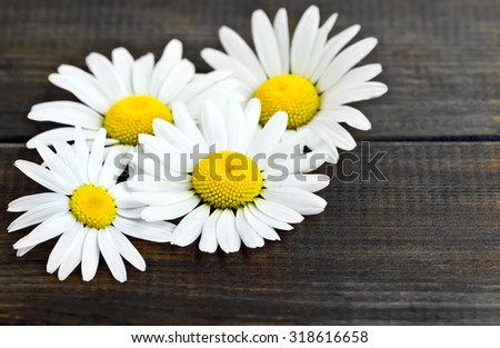 Daisy  chamomile flowers on wooden background - stock photo
