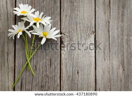 Daisy chamomile flowers on wooden background. View with copy space - stock photo