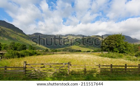 Daisy field with mountains blue sky and clouds scenic Langdale Valley Lake District Cumbria near Old Dungeon Ghyll England UK in summer - stock photo