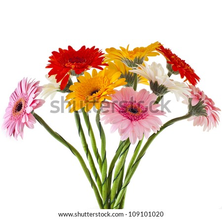Daisy flower gerbera bouquet isolated on white background - stock photo