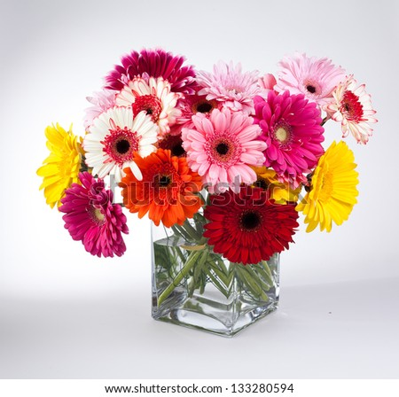 Daisy flower gerbera bouquet on white background - stock photo