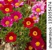 Daisy flower - Spring flower field close up - stock photo