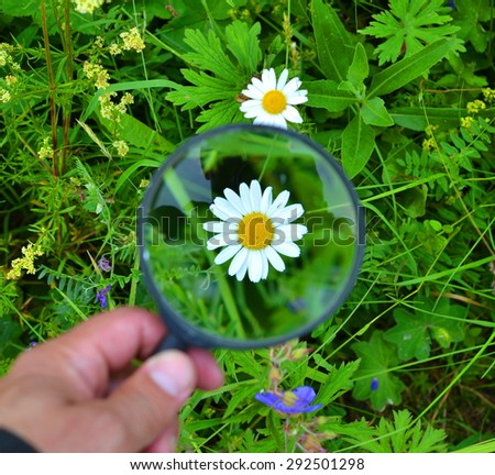 Daisy flower visible through a magnifying glass on a grass background - stock photo