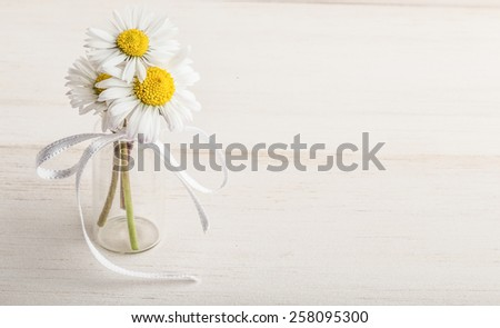 daisy flowers - stock photo