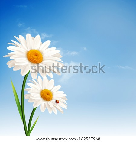 Daisy flowers. Abstract natural backgrounds for your design - stock photo