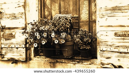 Daisy flowers and cactus in pots on the window of the old stone house. Lace curtain, rusty grille and open wooden shutters. Toned photo. - stock photo