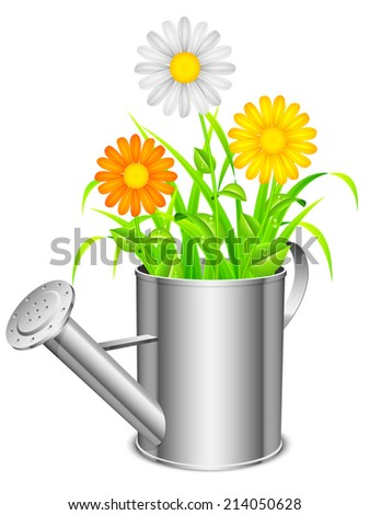 Daisy flowers and grass growing from metal watering can. - stock photo