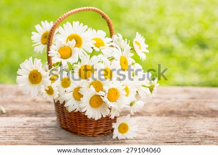 Daisy flowers in the small basket - stock photo