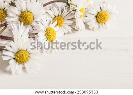 daisy flowers on wood - stock photo