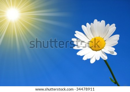 daisy in front of the blue sky