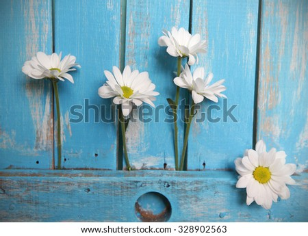 Daisy  in the cracks of  wooden background in a Sunny day with copy space