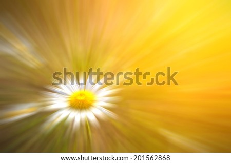 Daisy on a meadow in the sun. abstract composition - stock photo