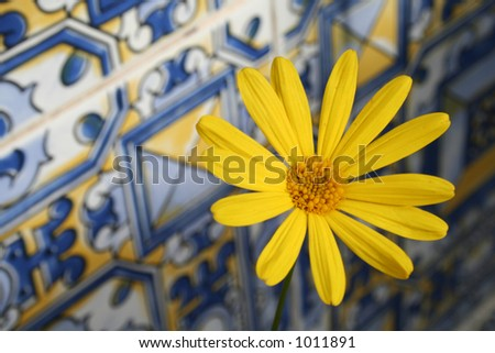 Daisy on andalusian tiles