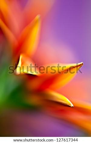 Daisy Palette Macro abstract of daisy flower. - stock photo