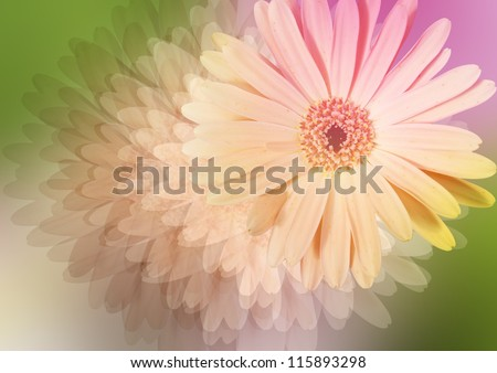 daisy - styled floral picture - stock photo