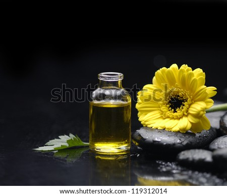 daisy with pebbles and massage oil on wet background - stock photo