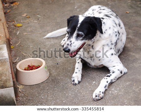 dalmatian dog no purebred laying on concrete garage floor with it's food bowl and dog food inside - stock photo