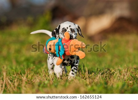 Dalmatian puppy playing with soft toy - stock photo