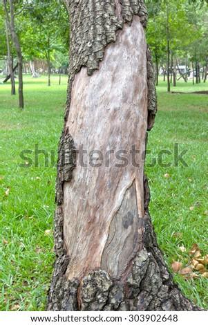 Damage on tree - stock photo