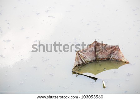 damage umbrella in pollution water. - stock photo