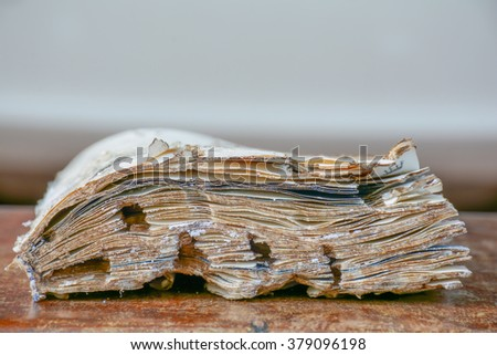 Damaged book eaten by termite.