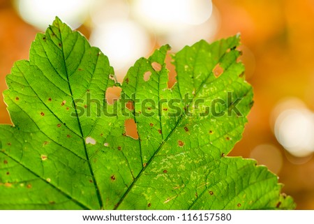 Damaged leaf with autumn colored background and selective focus. - stock photo