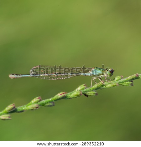 damsel dragonfly relaxing on the glass - stock photo
