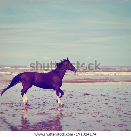 Dancing Horse on the North Sea Coast, Instagram Effect