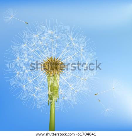 Dandelion. - stock photo