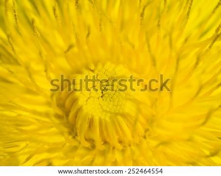 Dandelion abstract closeup,l art scene - stock photo