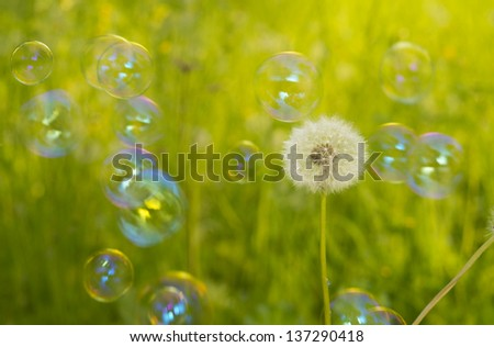 Dandelion an soap bubble on grass background - stock photo