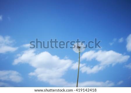 Dandelion and sky - stock photo