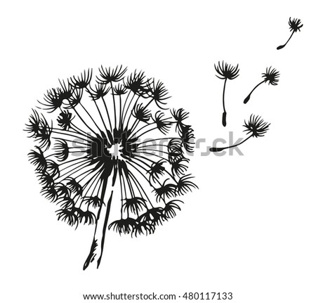 Dandelion blowing hand drawn illustration, isolated on white background