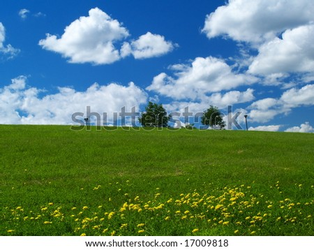 Dandelion field and blue cloudy sky - stock photo