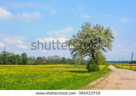 Dandelion field and spring road through yellow meadows, Latvia - stock photo
