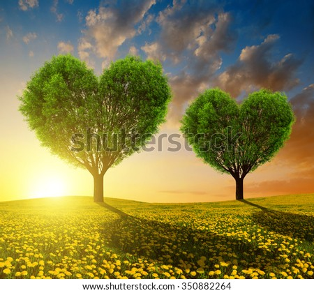 Dandelion fields with trees in the shape of heart at sunset. Valentines day. - stock photo