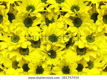 Dandelion flower background for design. - stock photo