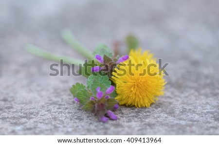 Dandelion flower on the stone background - stock photo