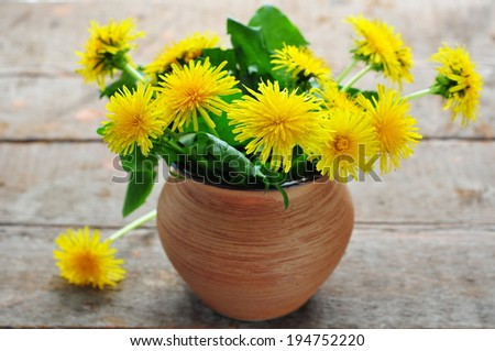 Dandelion flowers  - stock photo