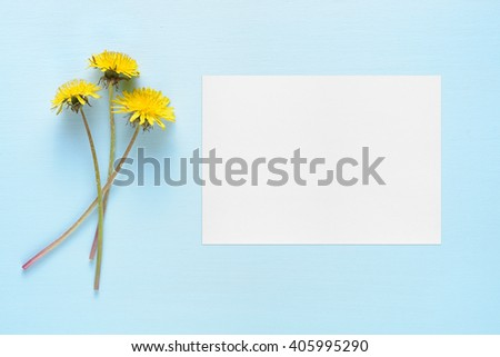 Dandelion flowers and blank greeting card on blue background