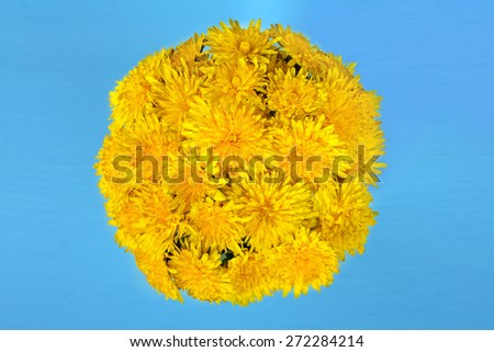 dandelion flowers in a glass on a blue wooden background - stock photo