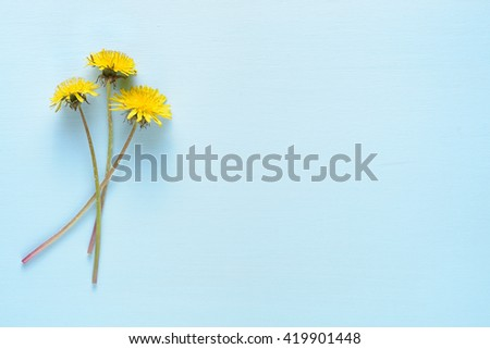 Dandelion flowers on blue background top view - stock photo