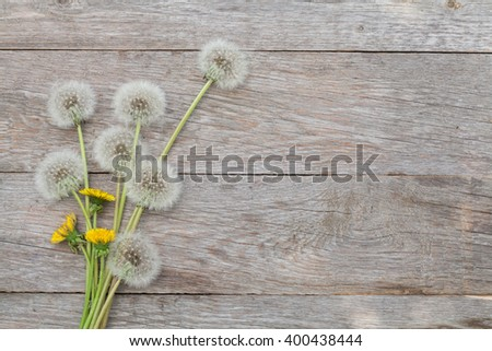 Dandelion flowers on wooden background with copy space - stock photo