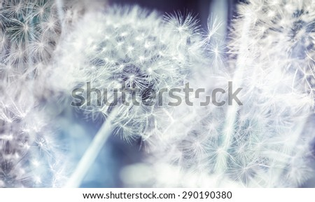 Dandelion flowers with fluff, colorful abstract nature background photo collage - stock photo