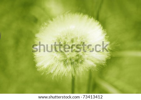 dandelion green tones - stock photo