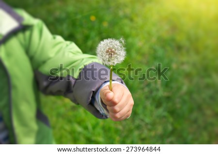 Dandelion in child hand. Green bokeh and soft daylight. - stock photo