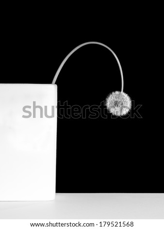 dandelion in square vase - black and white photo - stock photo