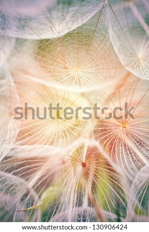 Dandelion,macro photo from the nature - stock photo