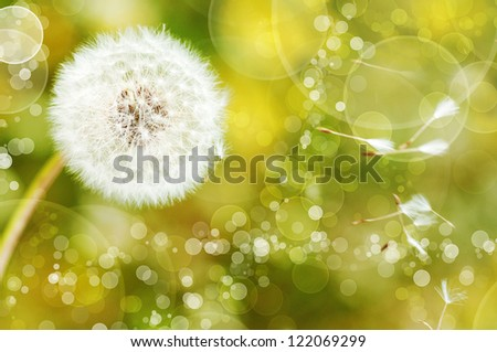 Dandelion on beautiful bokeh background
